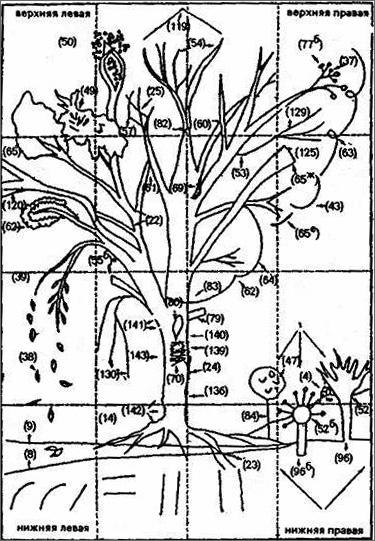 схему рисунка дерева